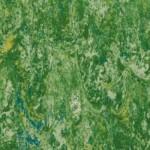 GRASS 14872650
